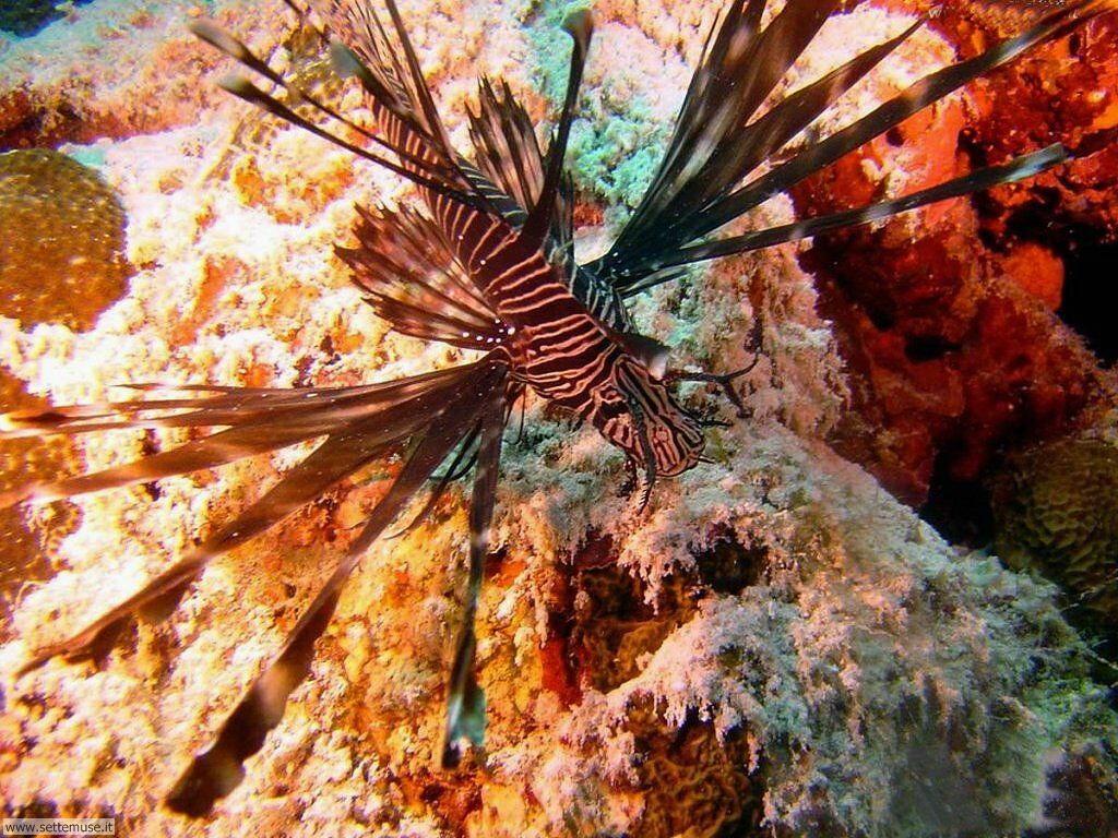 Foto sfondi della Barriera corallina 023
