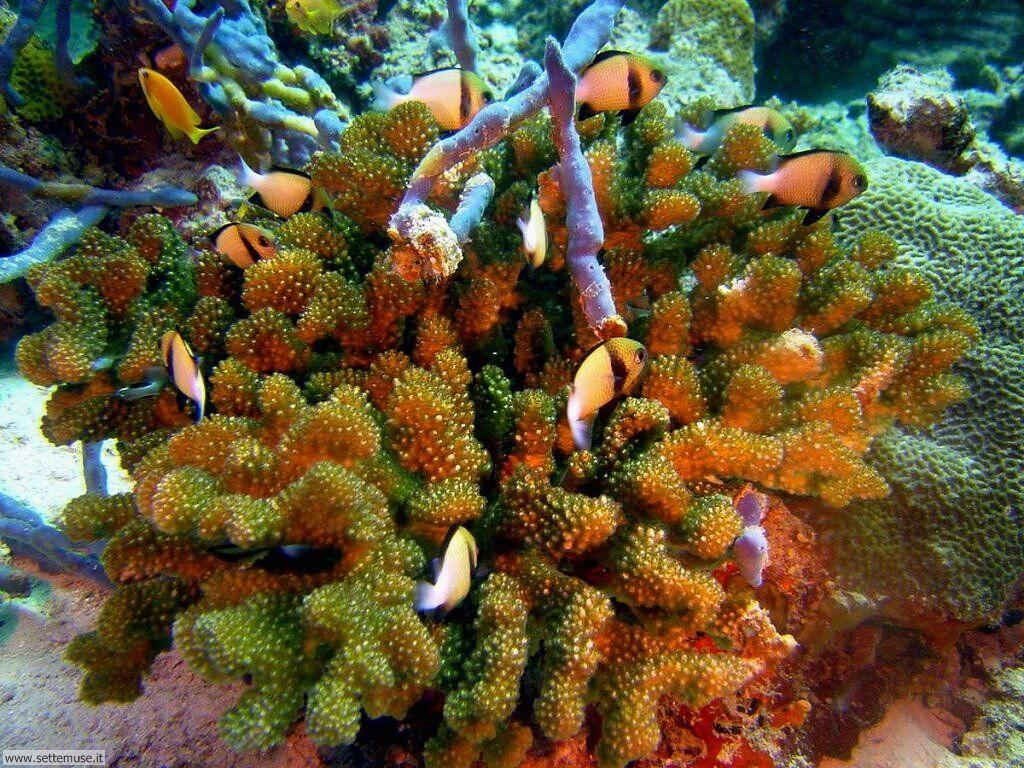 foto barriera corallina per sfondi pc
