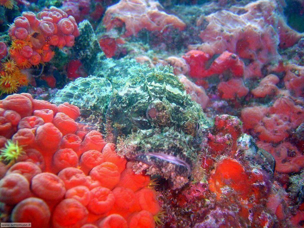 Foto sfondi della Barriera corallina 027