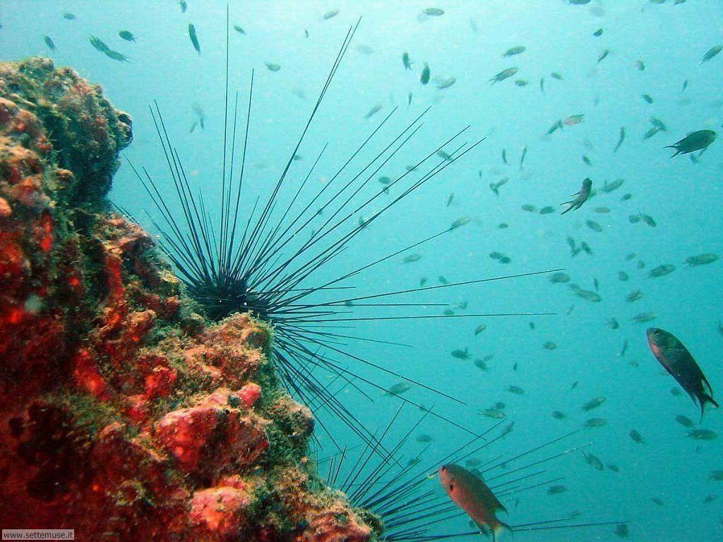 Foto sfondi della Barriera corallina 028