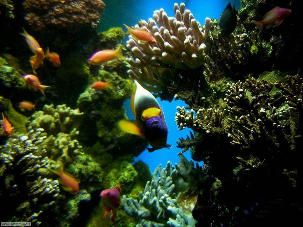Foto sfondi della Barriera corallina 030