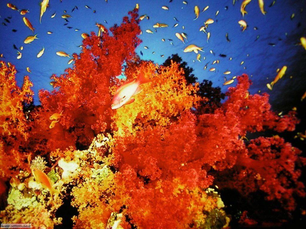 Foto sfondi della Barriera corallina 032