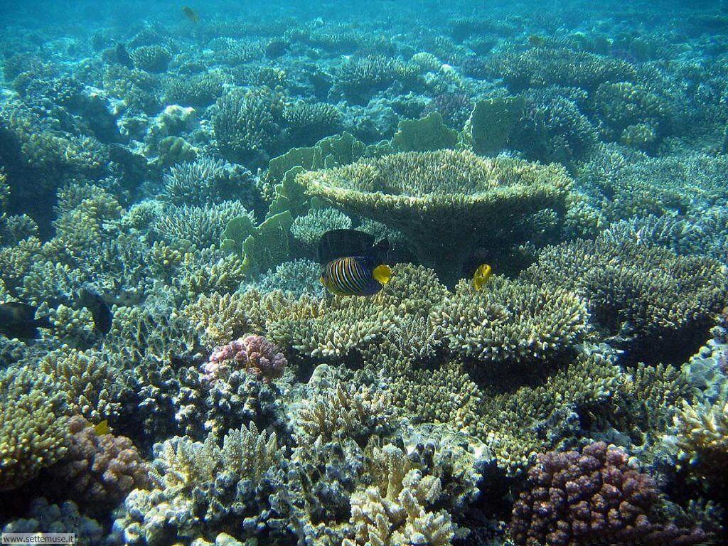 Foto sfondi della Barriera corallina 033