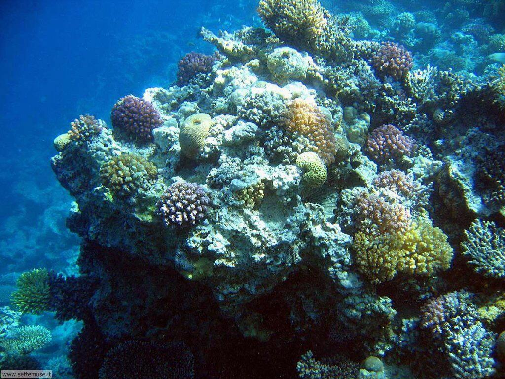 Foto sfondi della Barriera corallina 034