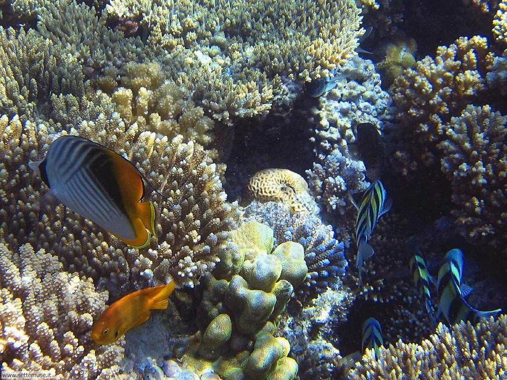 Foto sfondi della Barriera corallina 035