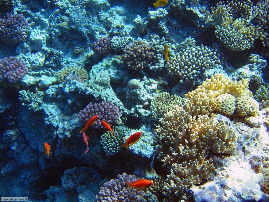 Foto sfondi della Barriera corallina 036