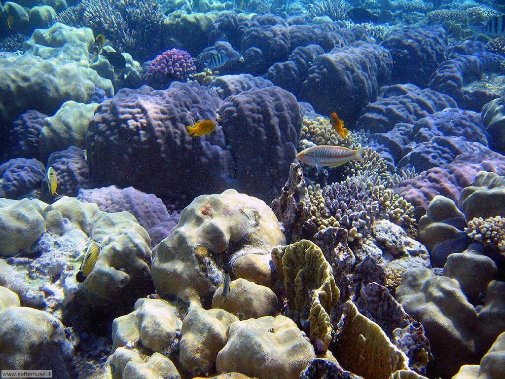 Foto sfondi della Barriera corallina 037