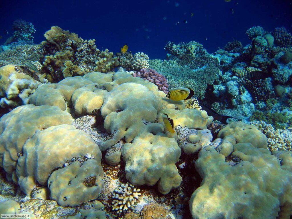Foto sfondi della Barriera corallina 040