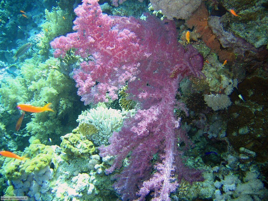 Foto sfondi della Barriera corallina 041