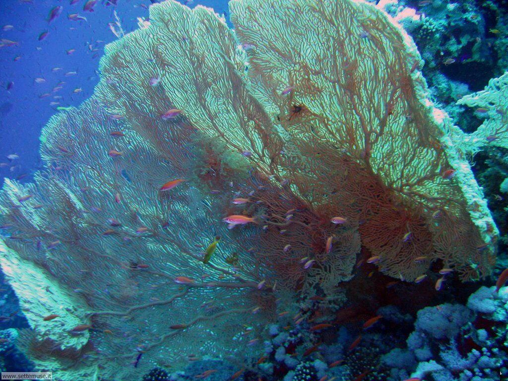 Foto sfondi della Barriera corallina 042