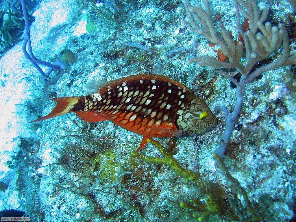 Foto sfondi della Barriera corallina 045