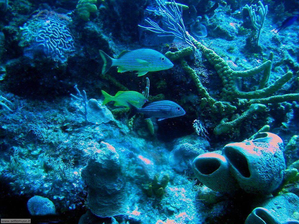 Foto sfondi della Barriera corallina 046