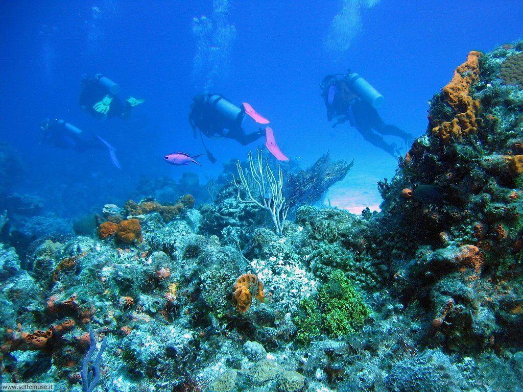 Foto sfondi della Barriera corallina 047