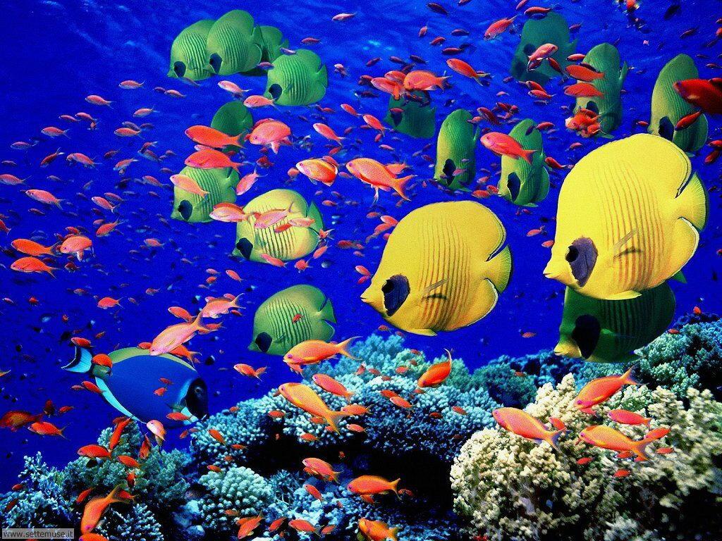 Foto sfondi della Barriera corallina 048