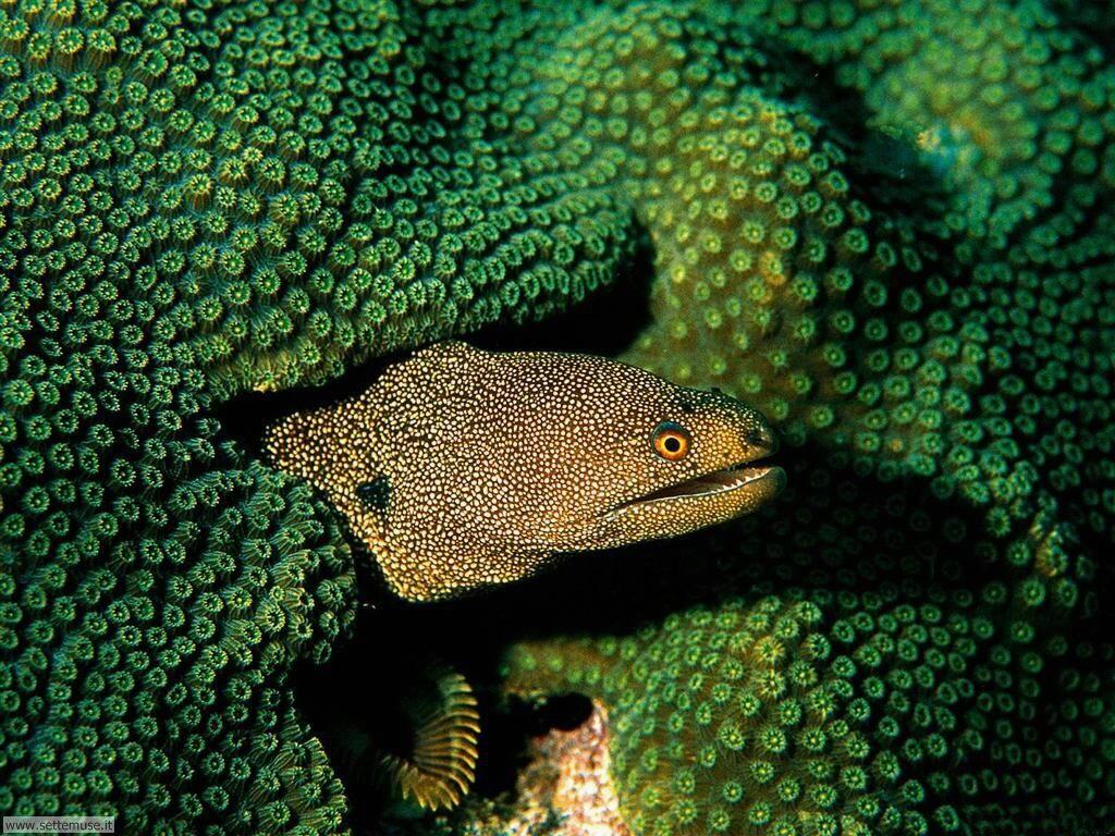 Foto sfondi della Barriera corallina 049