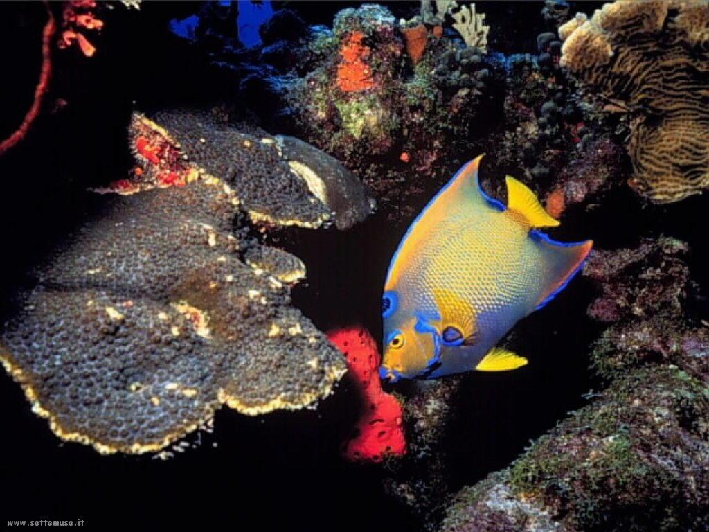 Foto sfondi della Barriera corallina 050