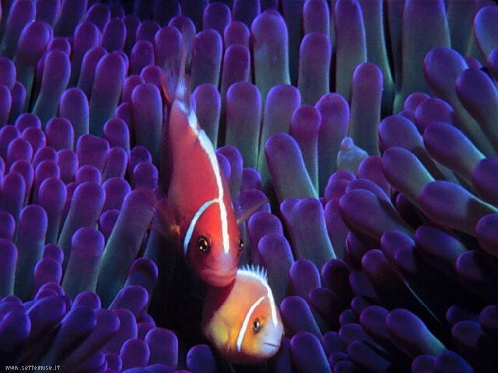 Foto sfondi della Barriera corallina 051
