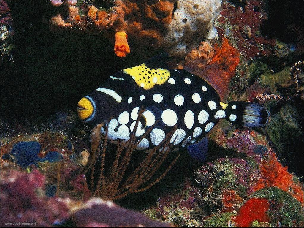 Foto sfondi della Barriera corallina 052