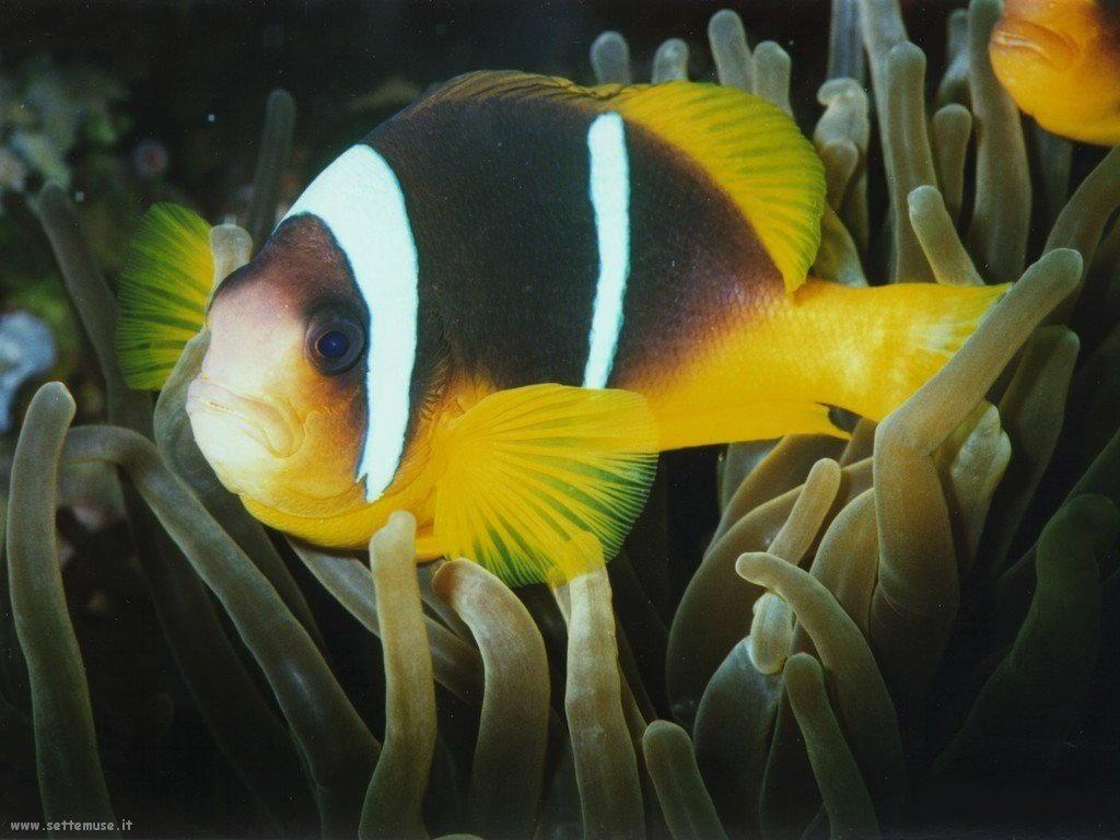 Foto sfondi della Barriera corallina 055