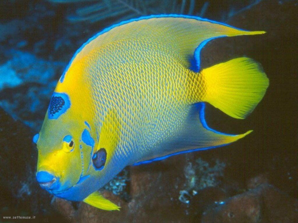 Foto sfondi della Barriera corallina 056