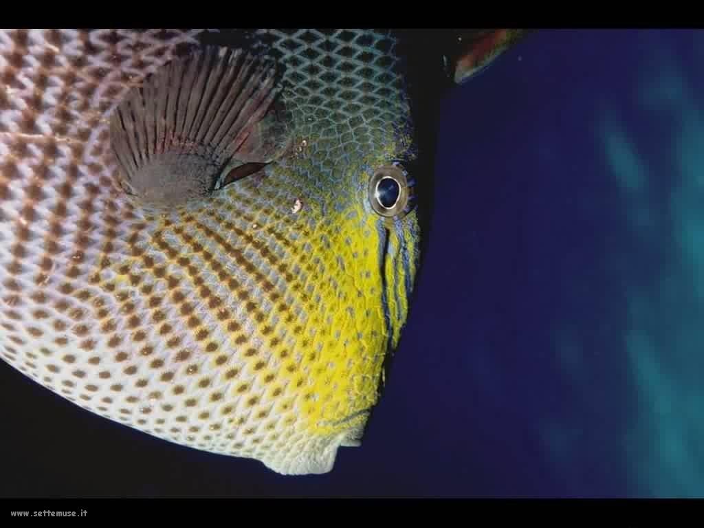Foto sfondi della Barriera corallina 057