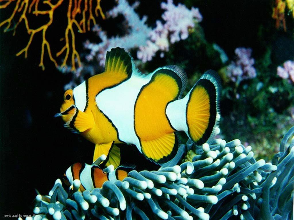Foto sfondi della Barriera corallina 060