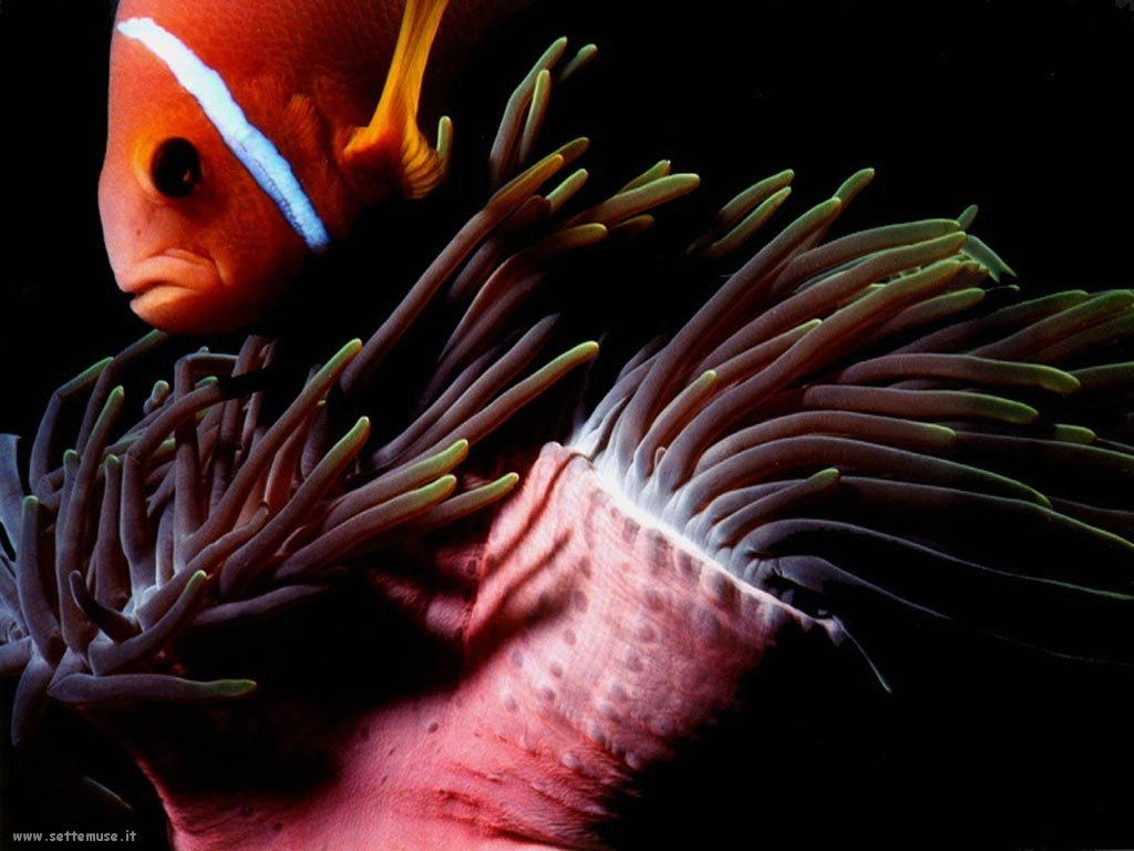 Foto sfondi della Barriera corallina 062