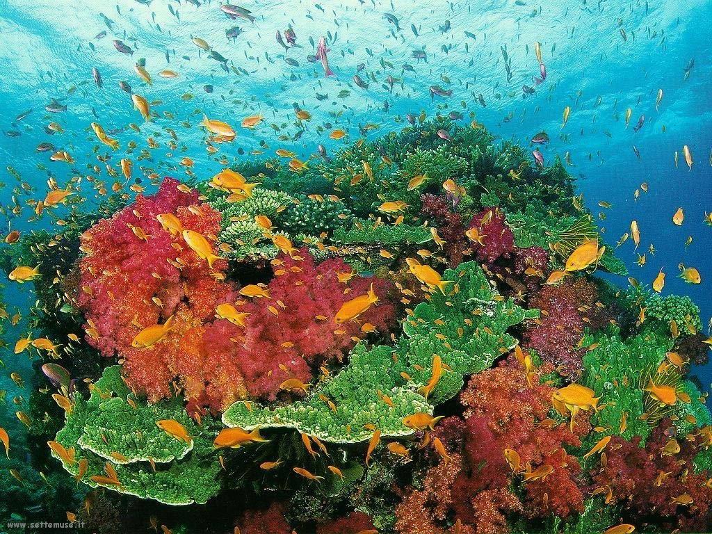 Foto sfondi della Barriera corallina 063