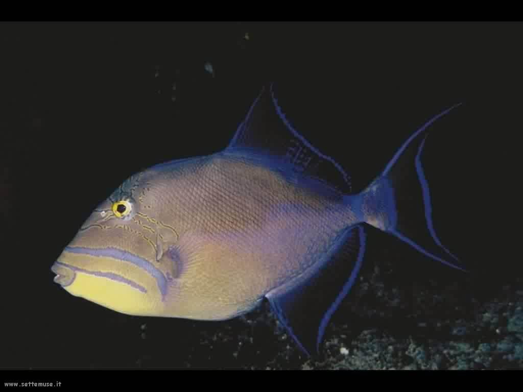 Foto sfondi della Barriera corallina 064