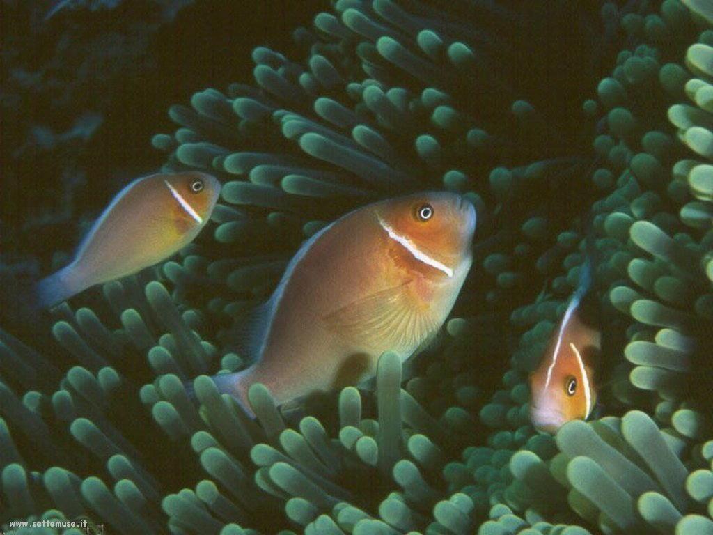 Foto sfondi della Barriera corallina 065