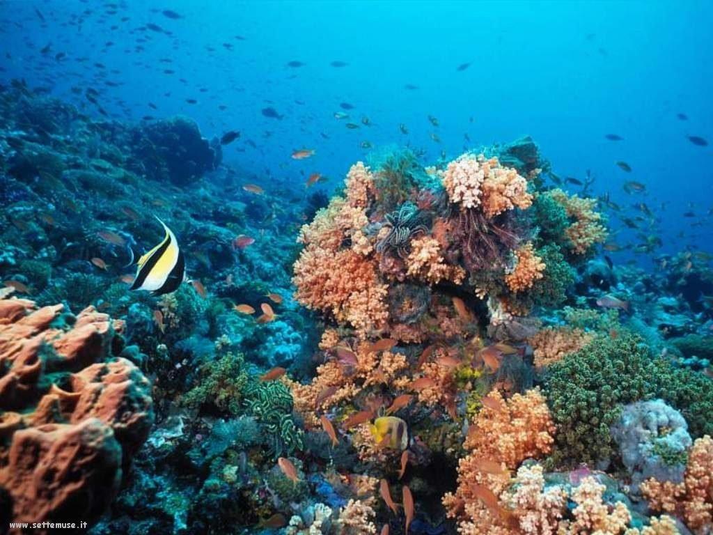 Foto sfondi della Barriera corallina 066