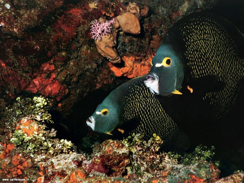 Foto sfondi della Barriera corallina 067