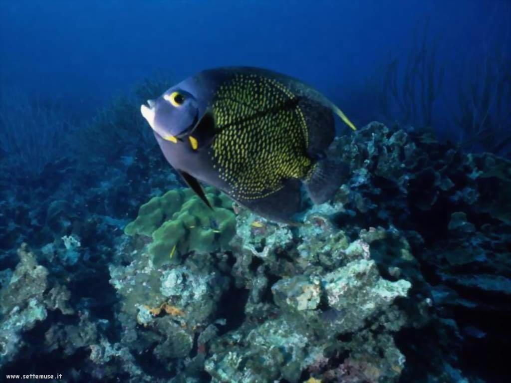 Foto sfondi della Barriera corallina 075