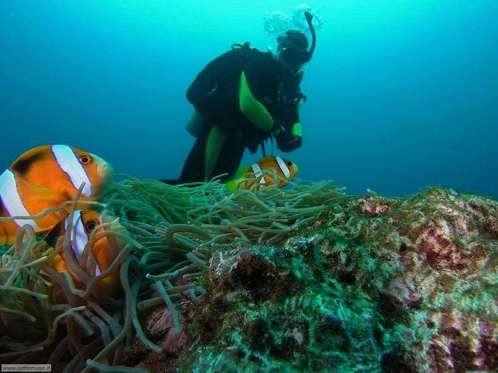 foto di pescatori e sub per sfondi