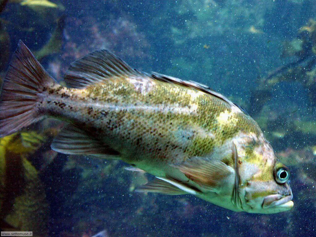 Foto pesci di mare per sfondi pc for Immagini coralli marini
