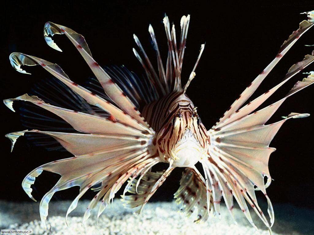 foto di pesci di mare per sfondi