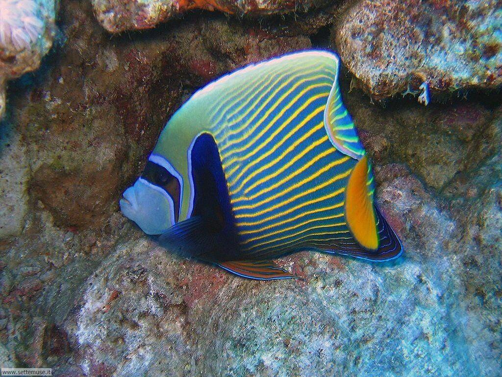 foto pesci di mare per sfondi pc
