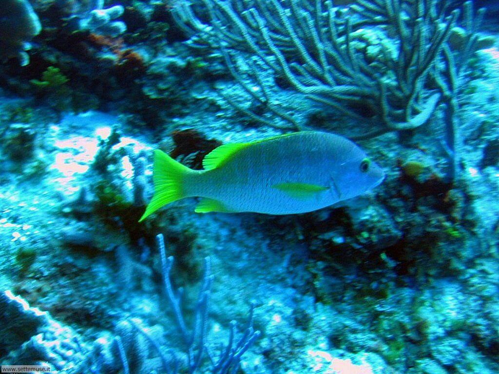Pesci marini 017