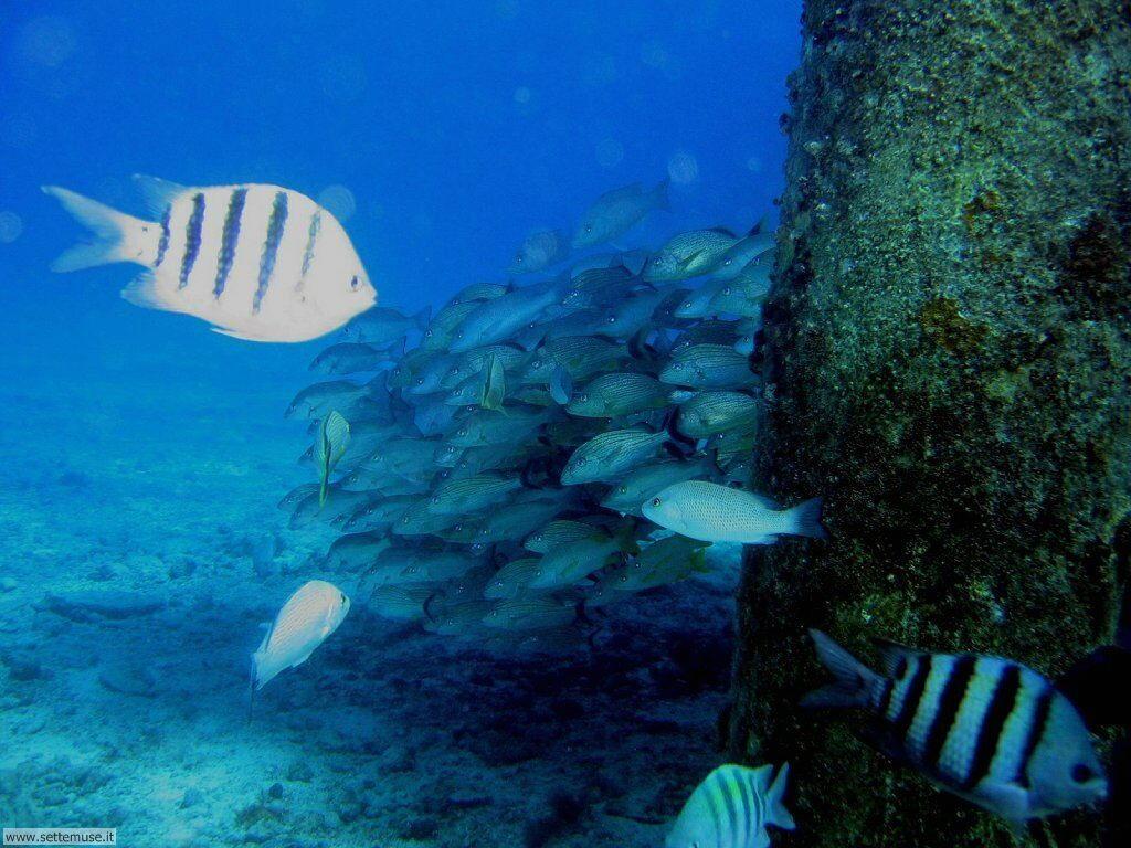 Pesci marini 018
