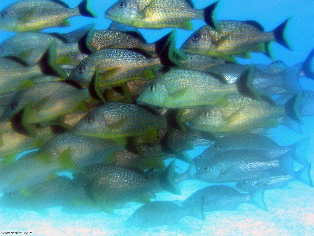 Pesci marini 024