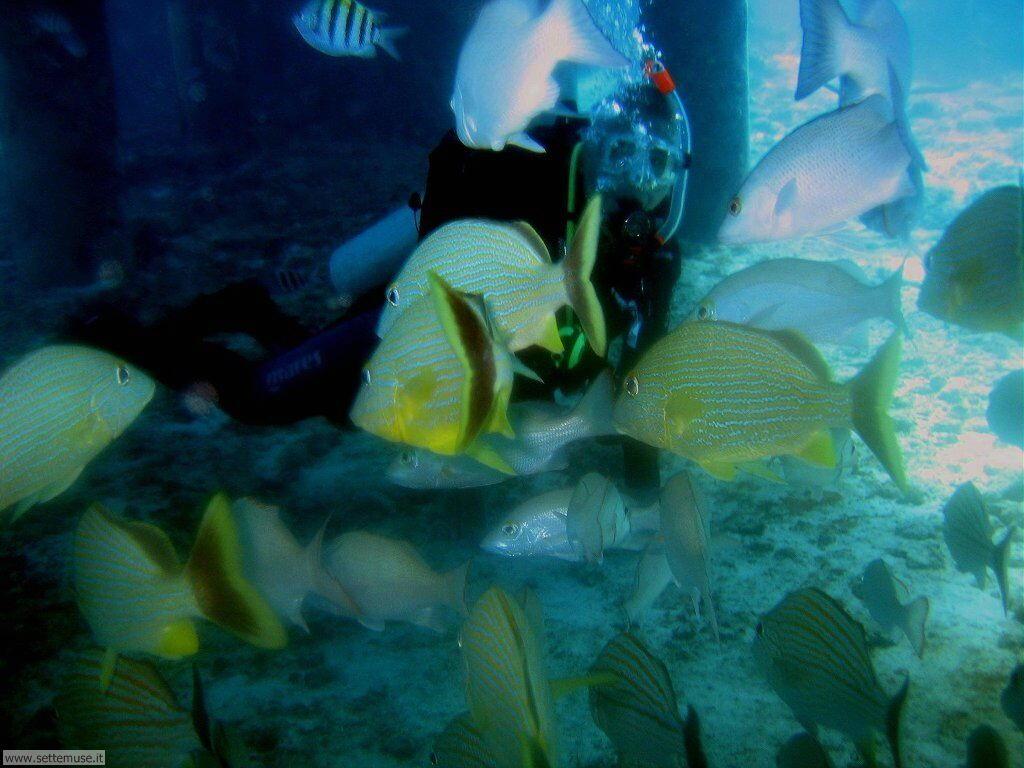 Pesci marini 026
