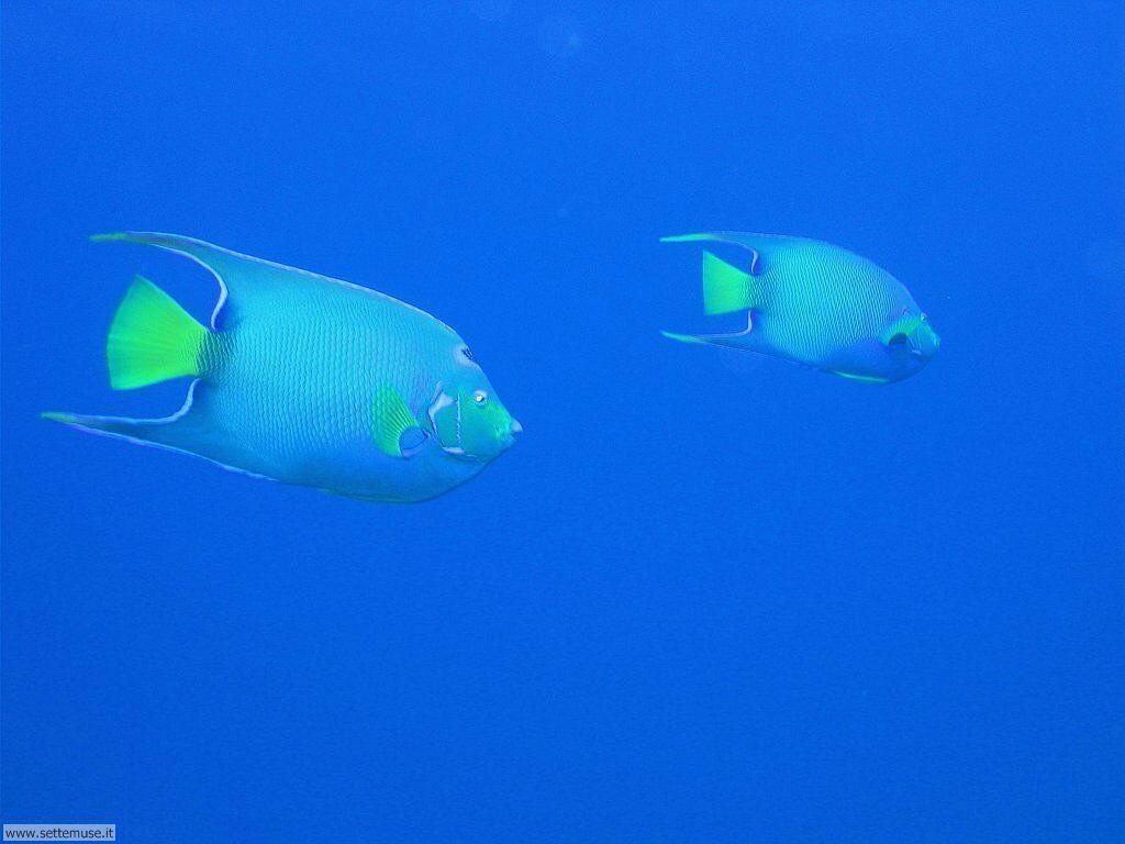 Pesci marini 027