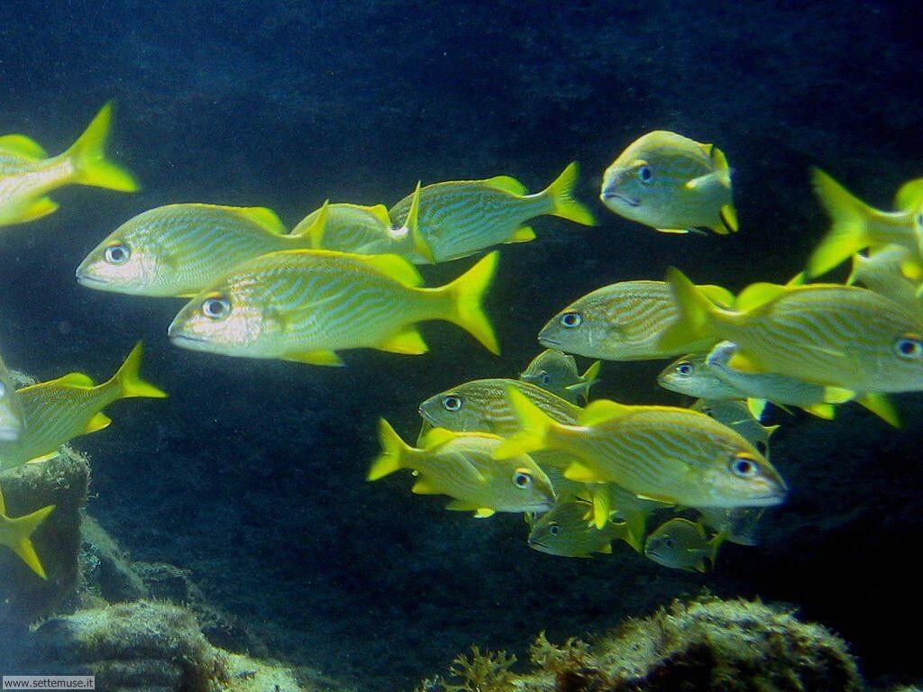 Pesci marini 031
