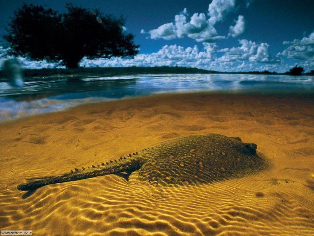 Foto pesci di mare per sfondi pc for Immagini hd mare