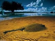 Foto sfondi pesci di mare