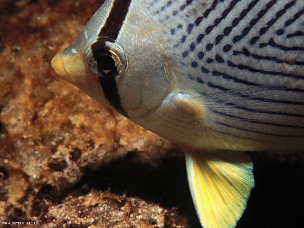 Pesci marini 039