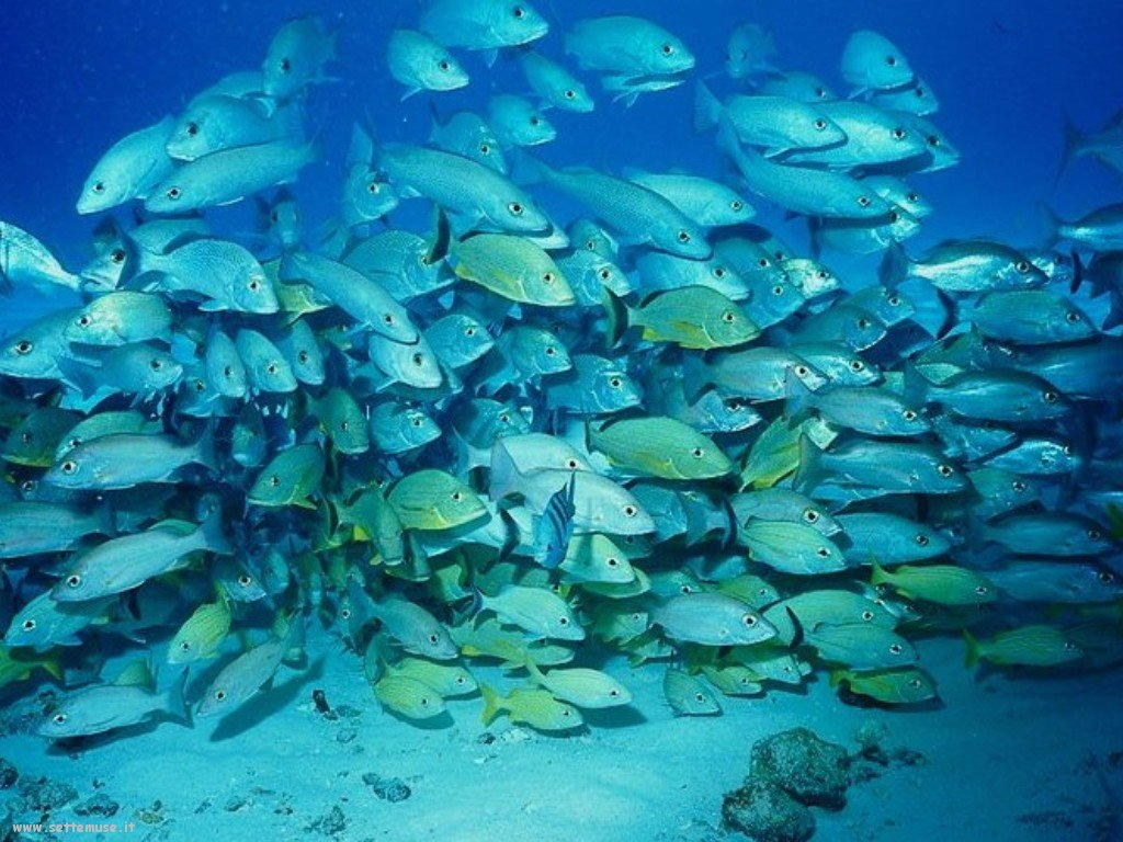 Pesci marini 040