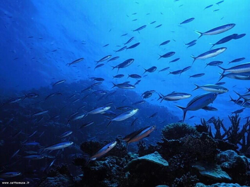 Pesci marini 041