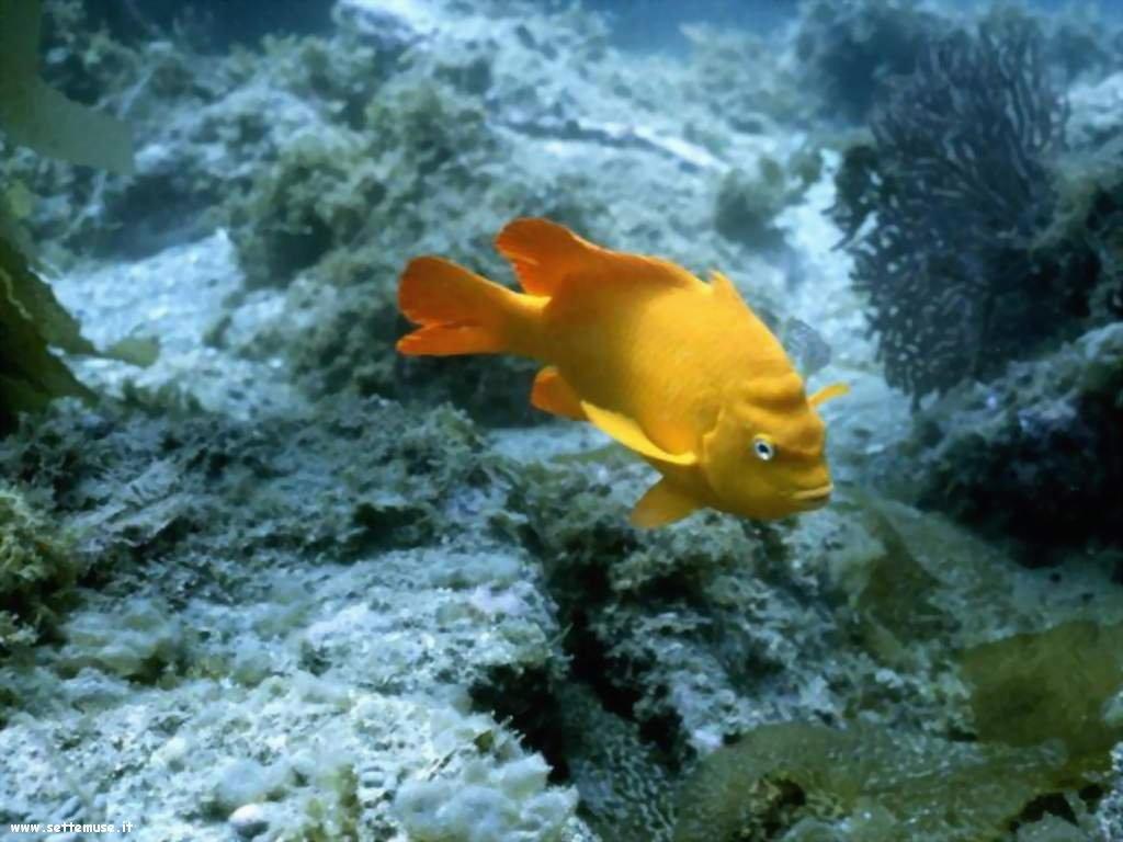 Pesci marini 044