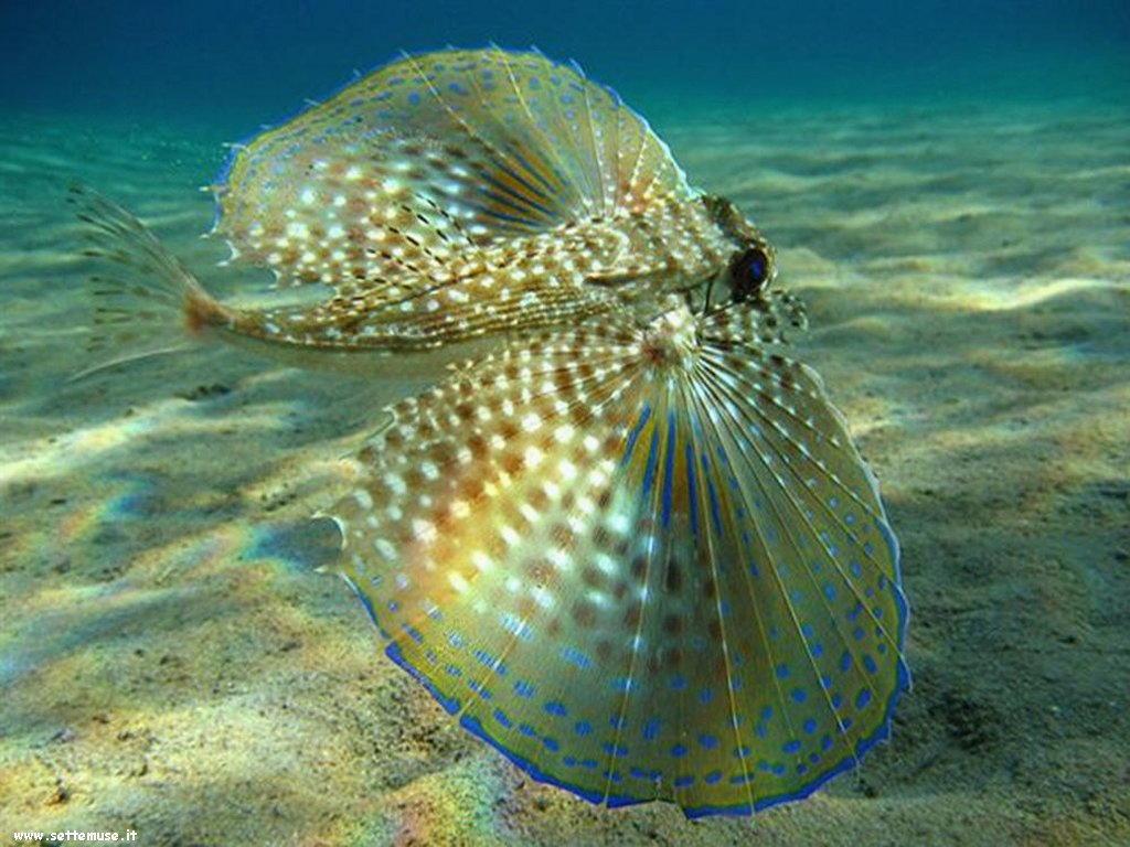 Pesci marini 045